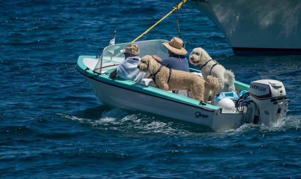 Skicka in dina bästa bilder på hunden ombord!