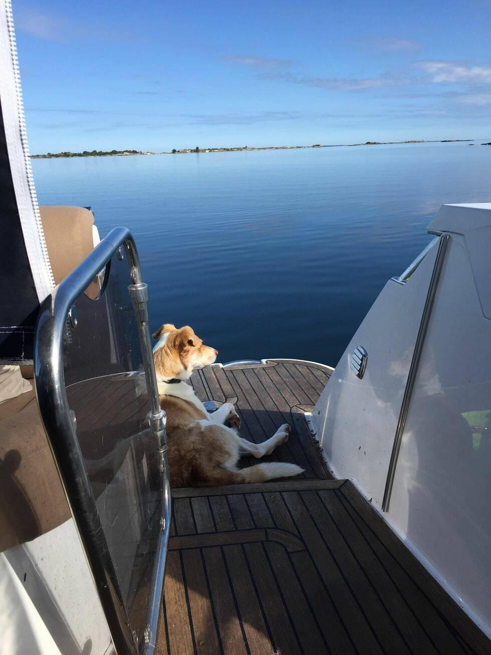 Så är hundlivet ombord!