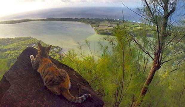 TV: Hon långseglar på världshaven – med en katt i besättningen