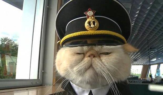 TV: Här är katten som har befälet på den ryska floden