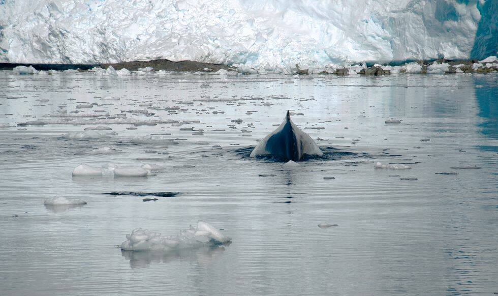 Reportage: Följ med på magisk segling till Antarktis